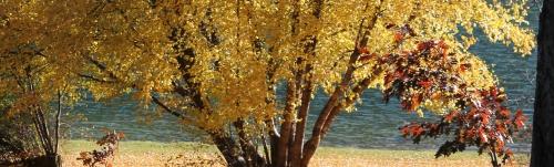 trees-1