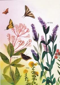 butterfly-garden_0001