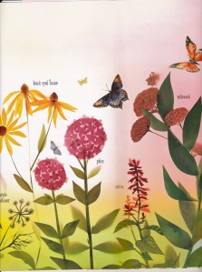 butterfly-garden_0003